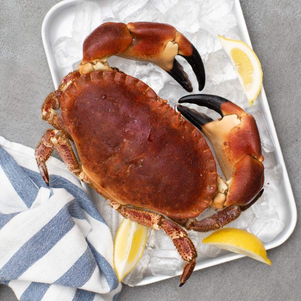 A cooked crab sitting on a tray